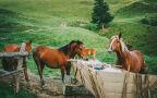 Tatrzańskie konie nie pracują w Boże Ciało