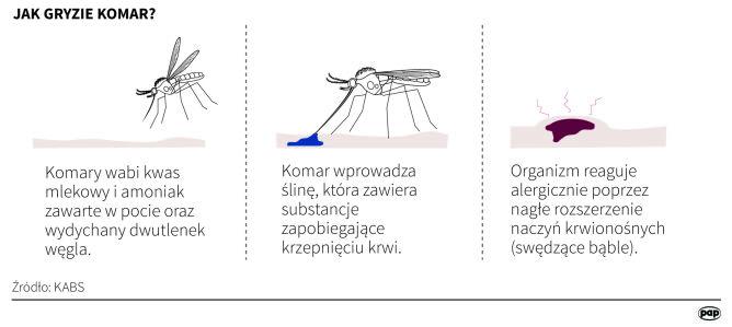 Jak gryzie komar? (Adam Ziemienowicz, Maria Samczuk/PAP)